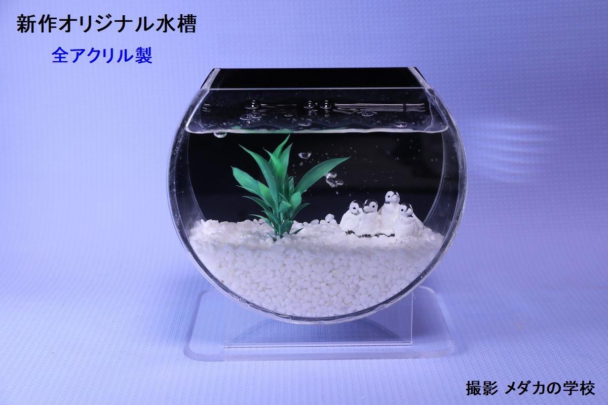 インテリア水槽
